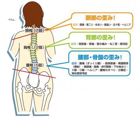 骨盤を整えるれば、姿勢は美しくなれる!